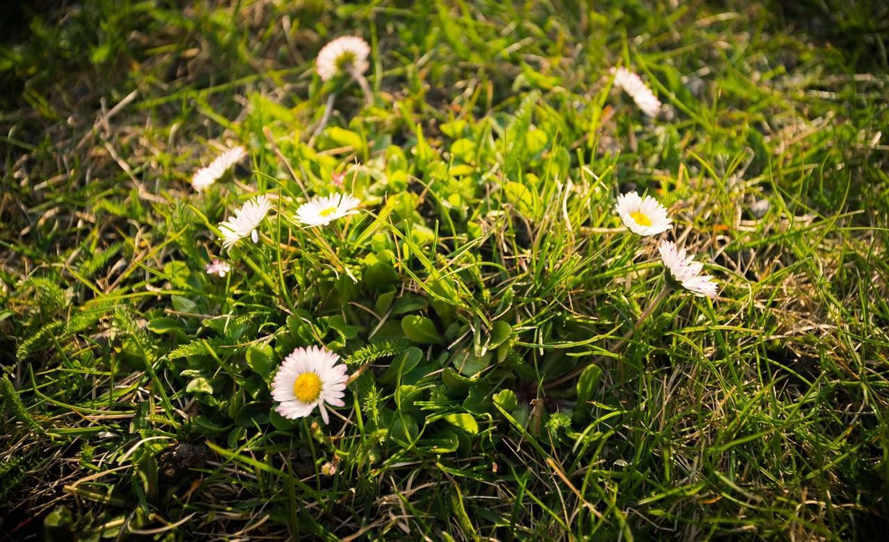 Милые цветы на газоне