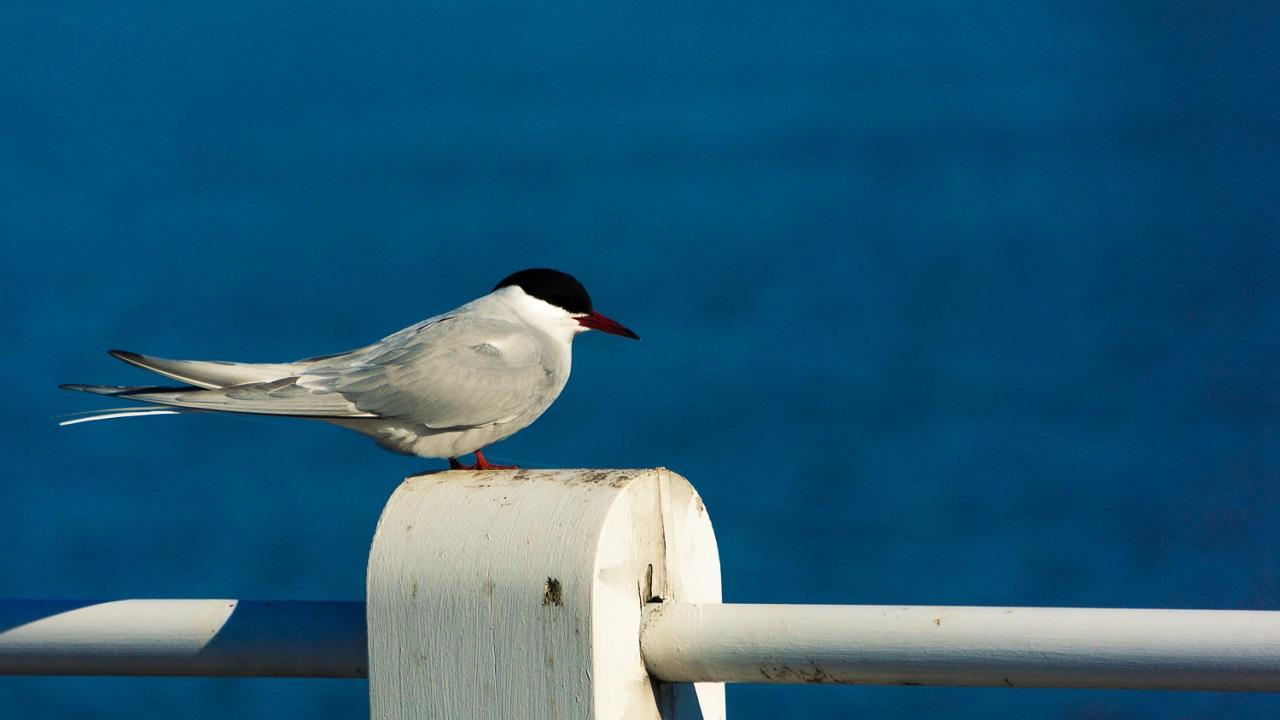Белая птичка на мосту