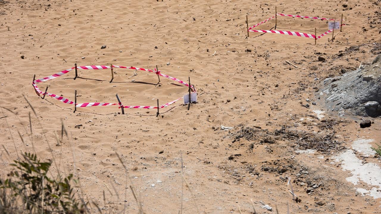 Черепашьи гнезда на пляже Кунопетра (Kounopetra)
