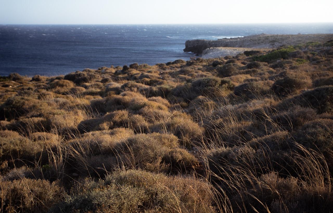 Растительность около маяка Герогомпос (Gerogompos)