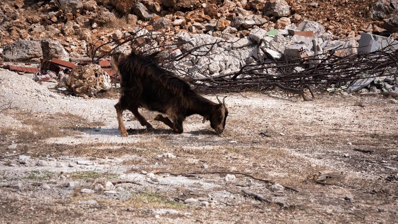 Вот так козы кушают, сгибая коленки