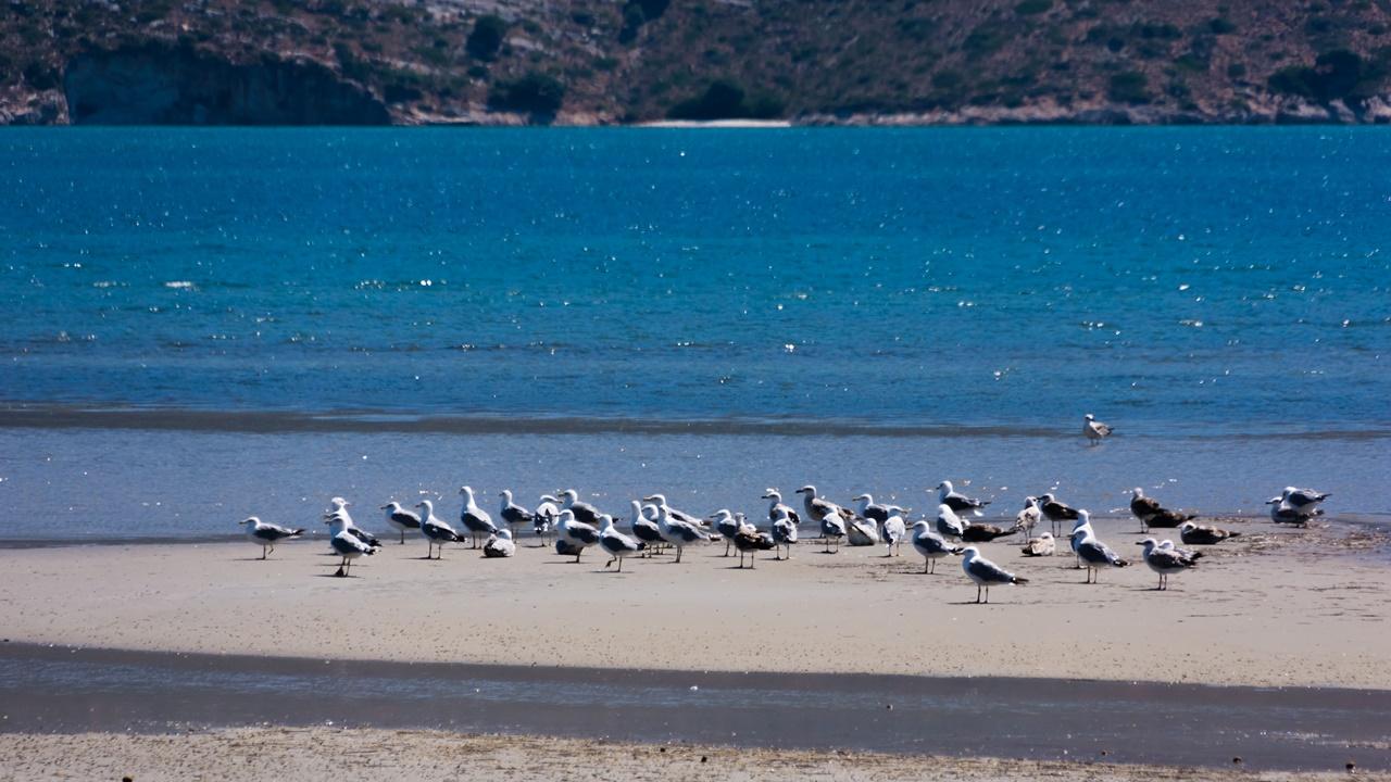 Чайки в водно-болотном Ливади