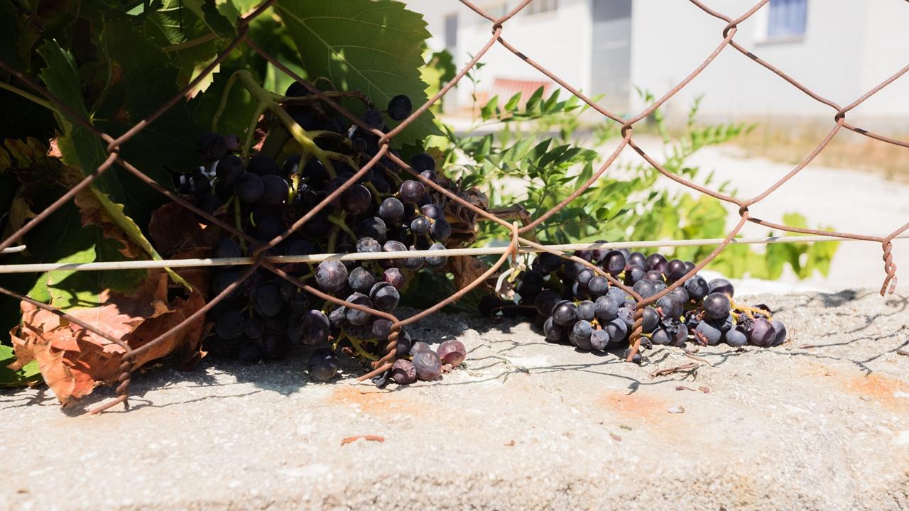 Виноград около Aspasia Studios