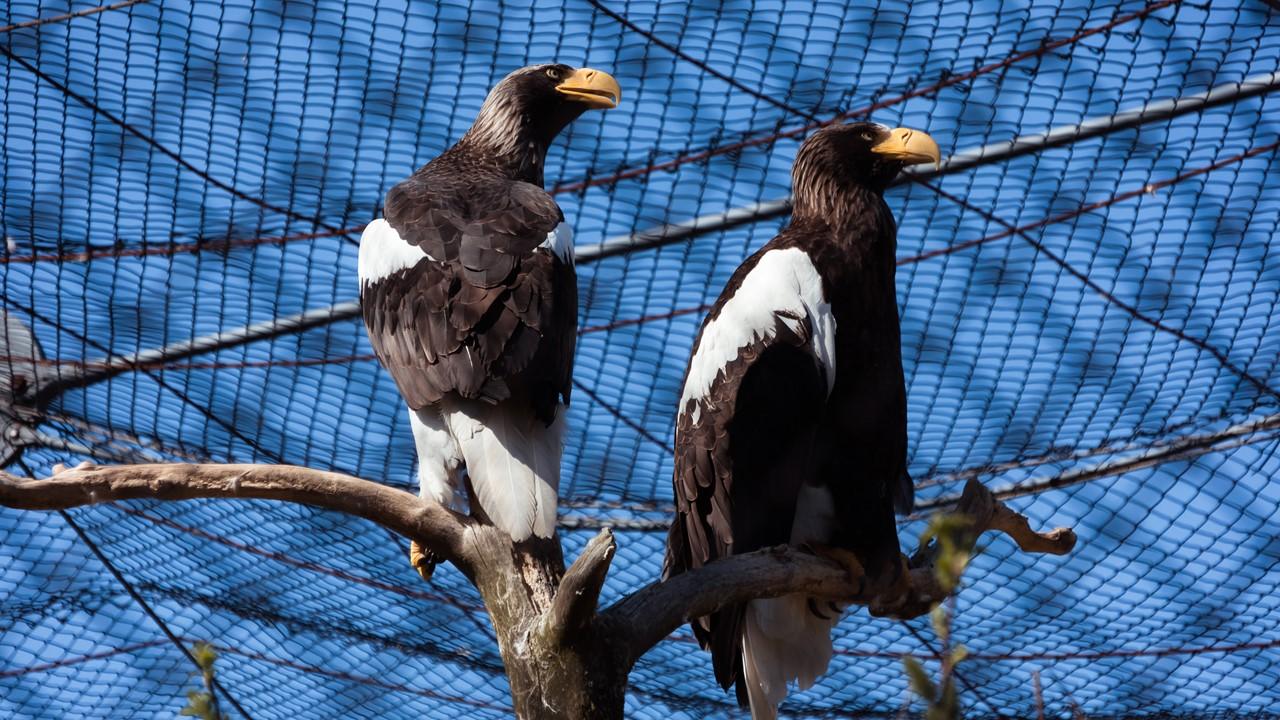 Хищные птицы в зоопарке Хельсинки