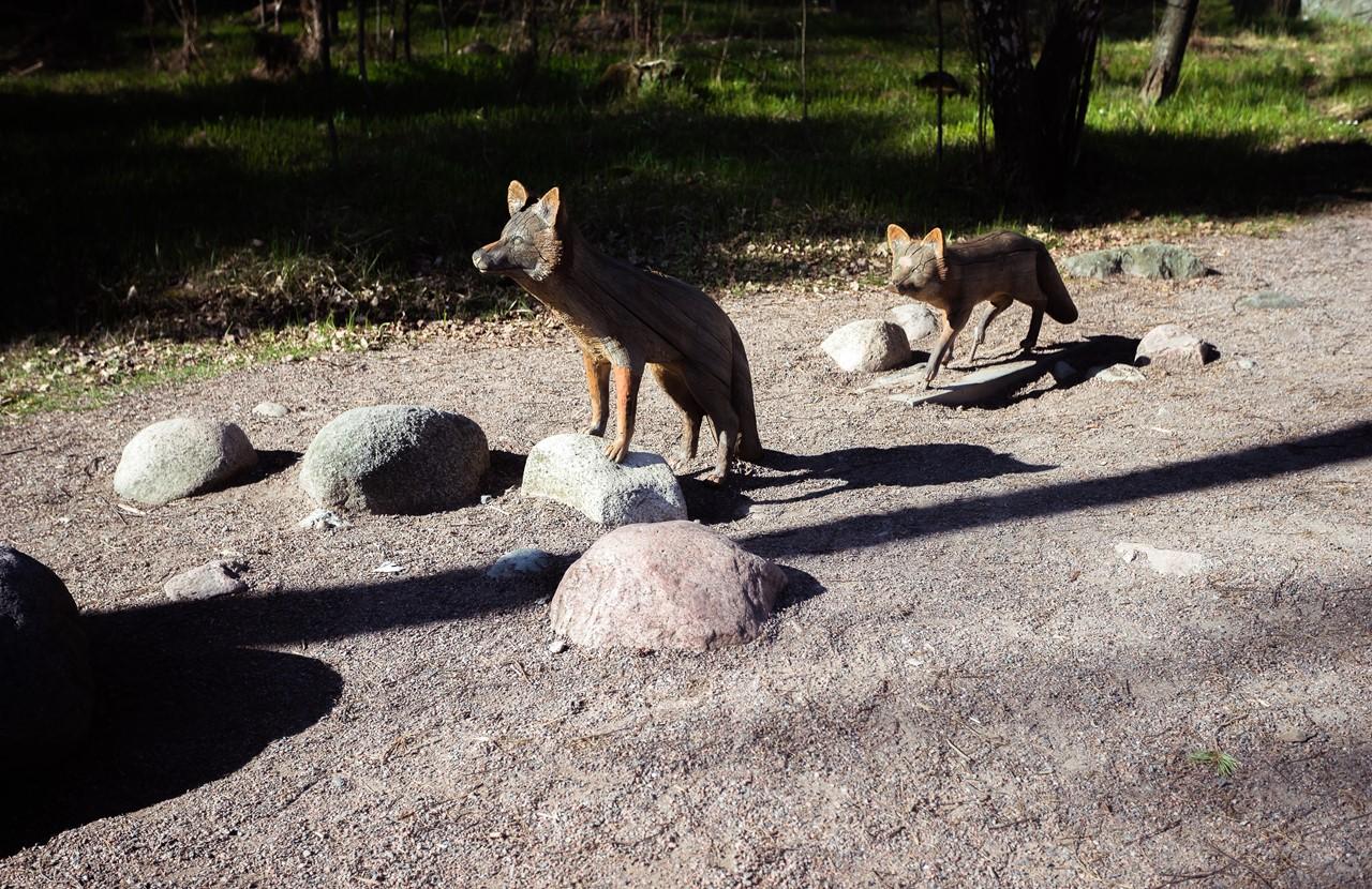 Фигуры лисиц на острове Мустиккамаа, смотрящих на зоопарк Хельсинки