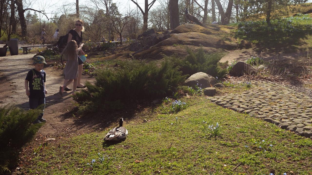 Некоторые птицы в зоопарке Хельсинки находятся вне вольеров