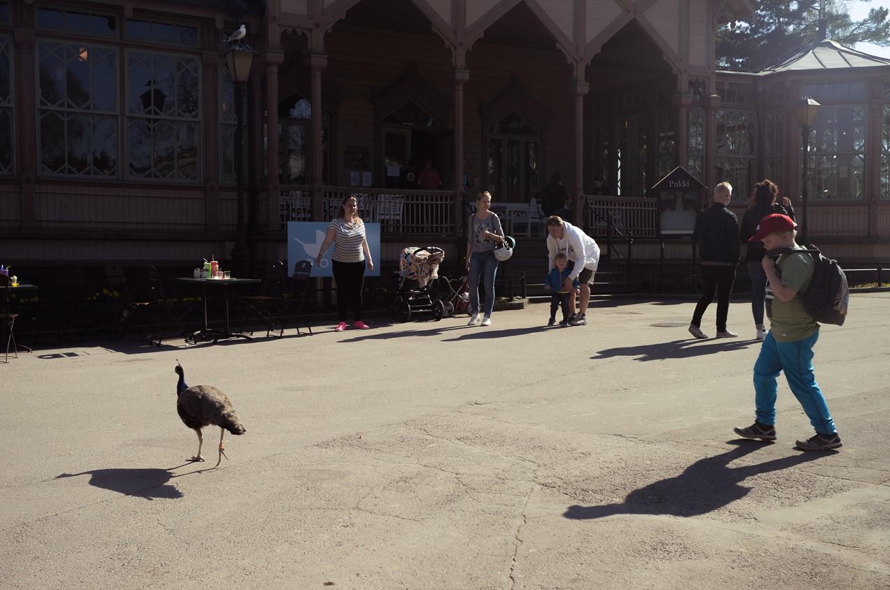 Птичка, гуляющая сама по себе