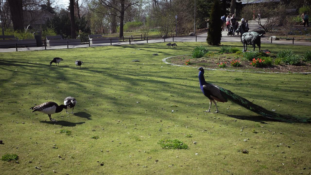 Зеленая лужайка в зоопарке Хельсинки