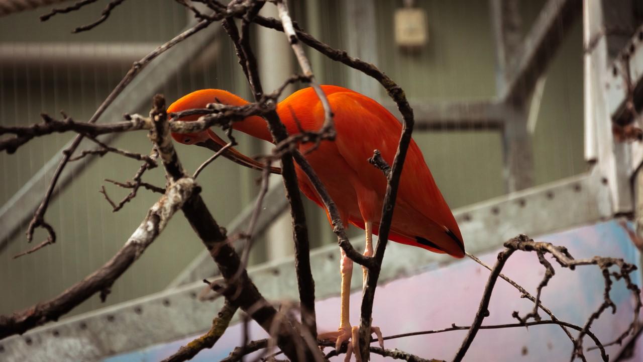 Тропическая птица зоопарка Хельсинки
