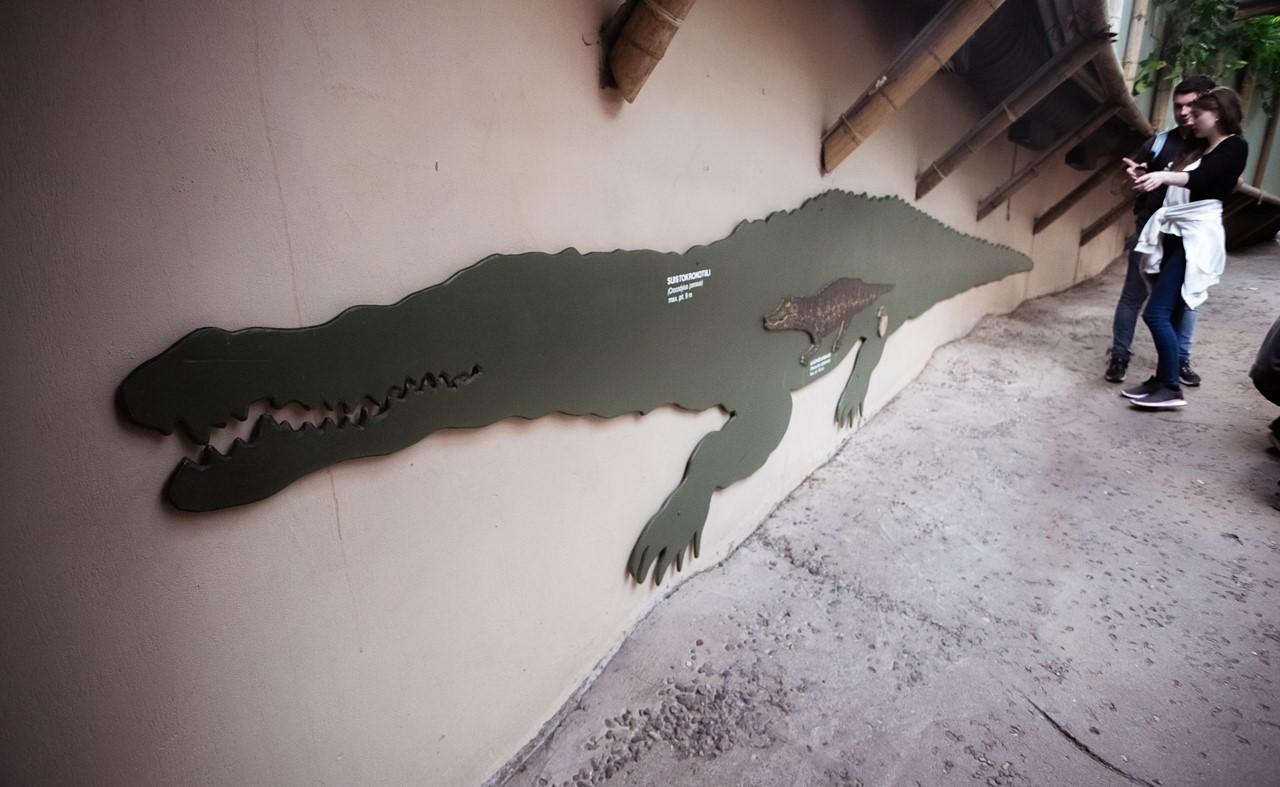 Прогресс роста крокодила