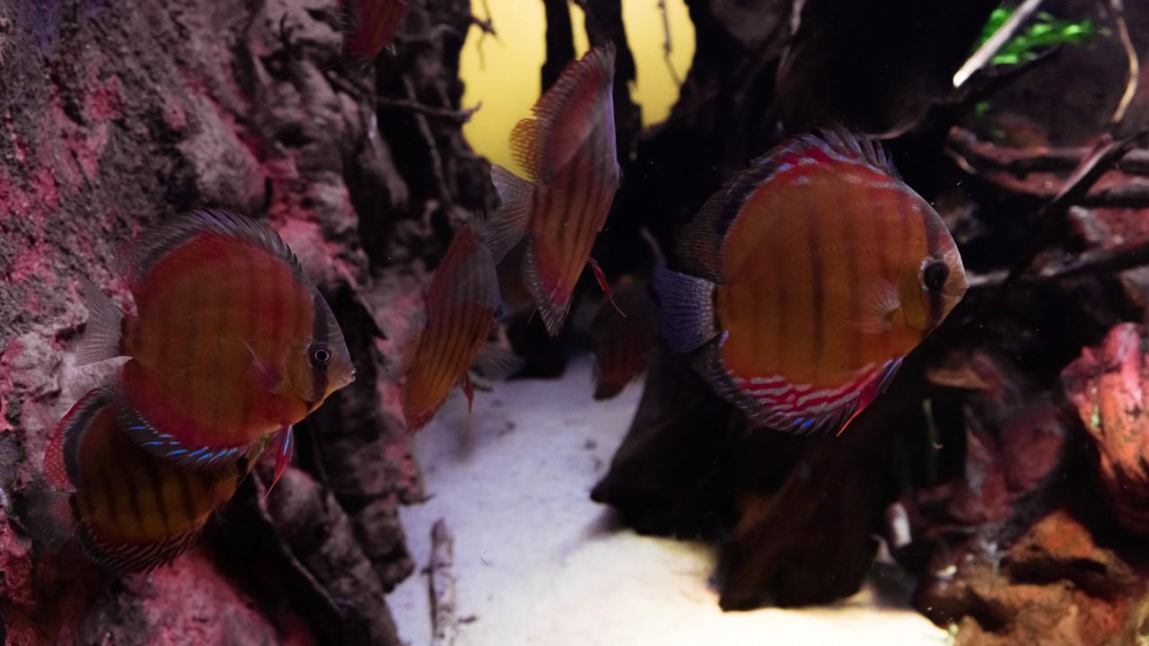 Плоские рыбки
