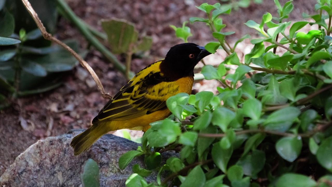 Птичка, следящая за прихорашивающимися