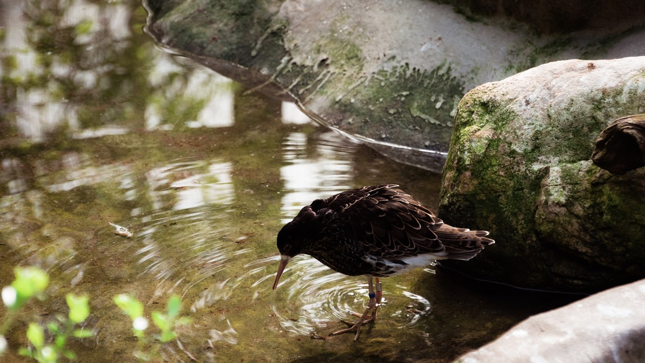 Птица в зоне финской природы в зоопарке Хельсинки