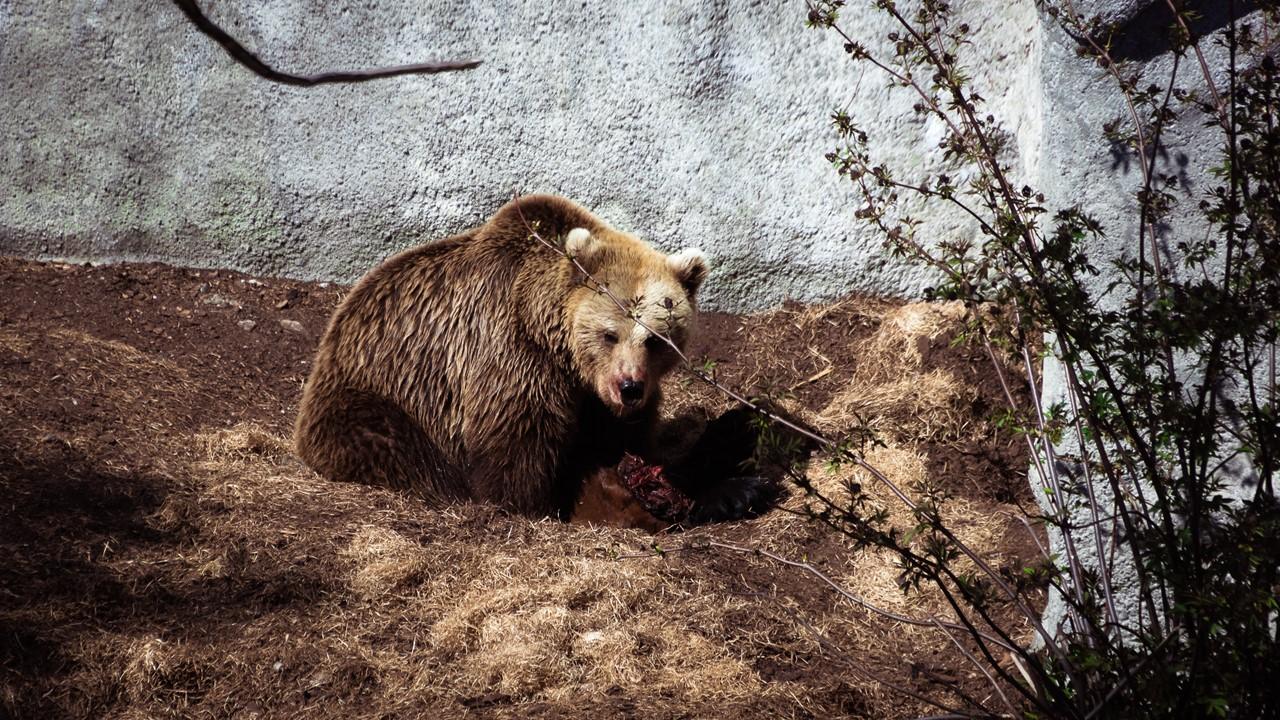 Медведь на обеденном перерыве