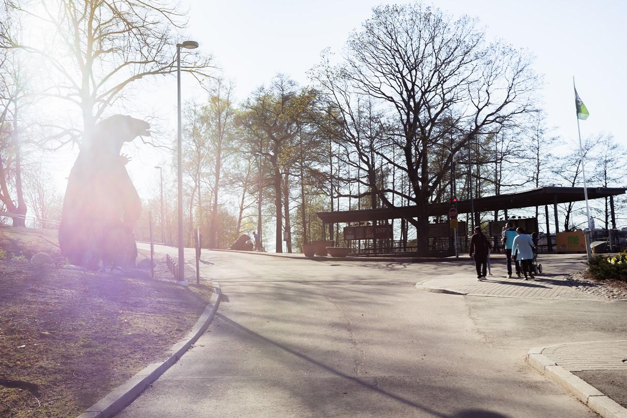 Медведь зоопарка Коркеасаари в лучах заходящего солнца