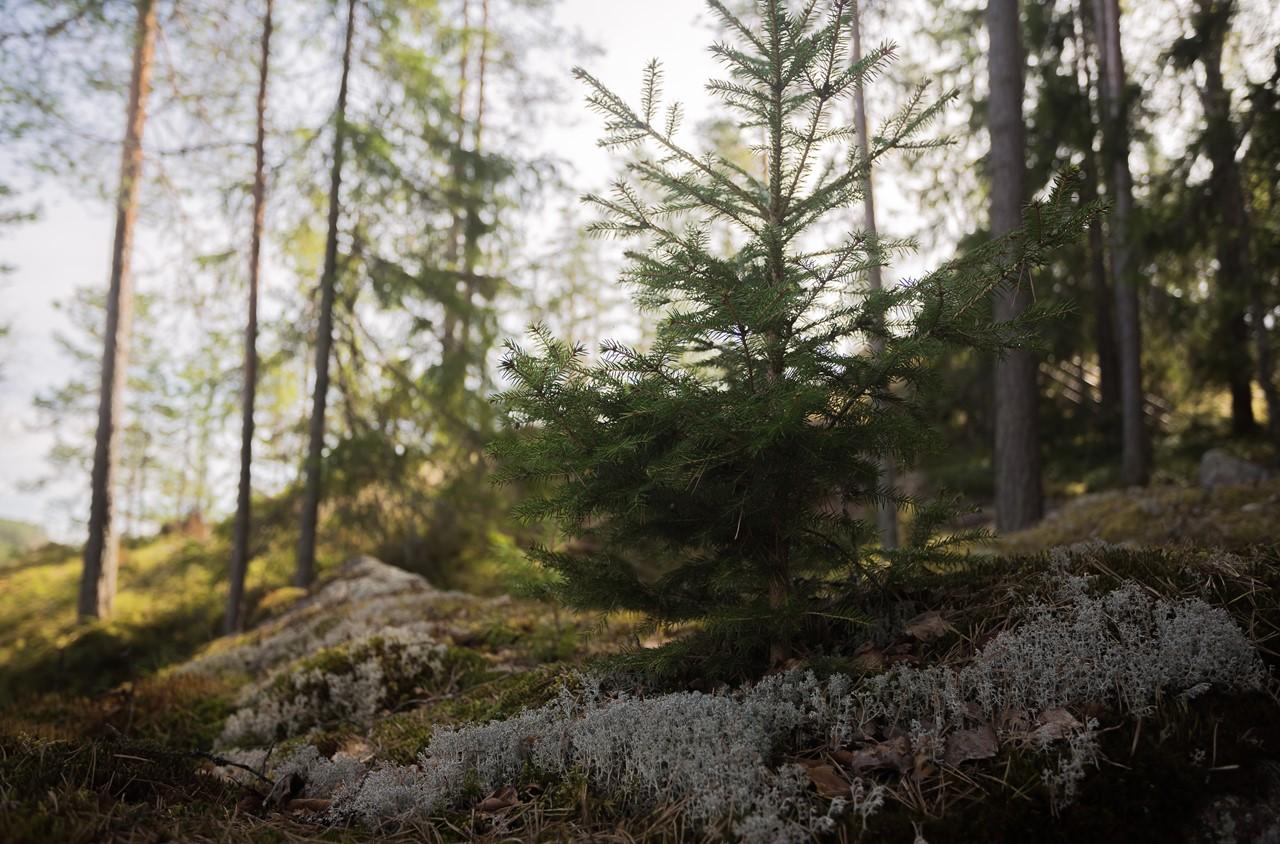 Маленькие растения и мхи