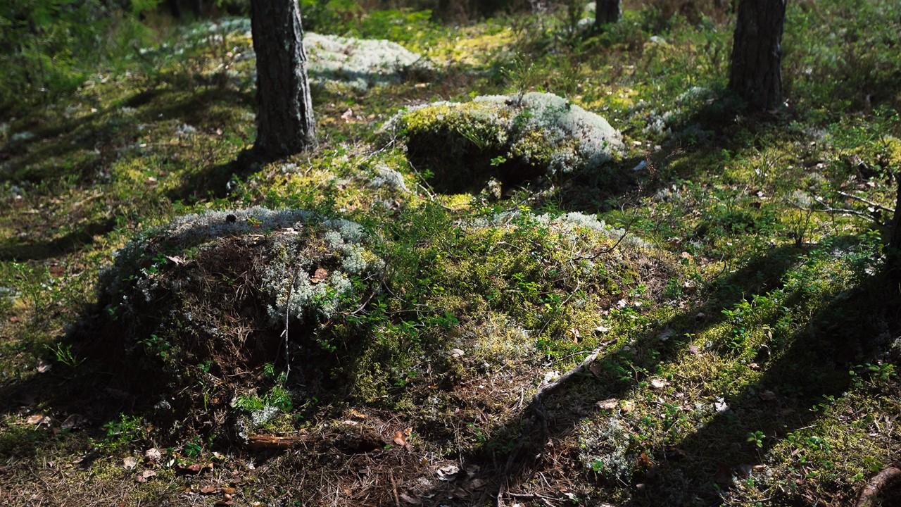 Мхи и растения Реповеси