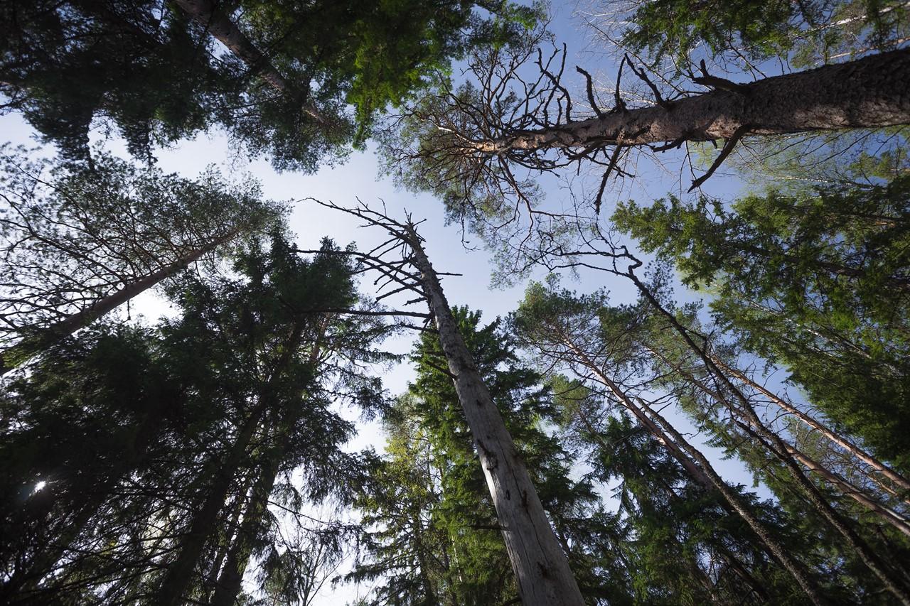 Кроны деревьев парка