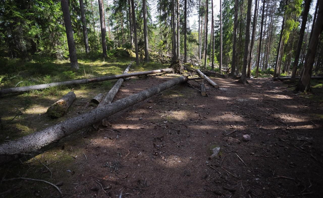 Порубленные деревья на склоне