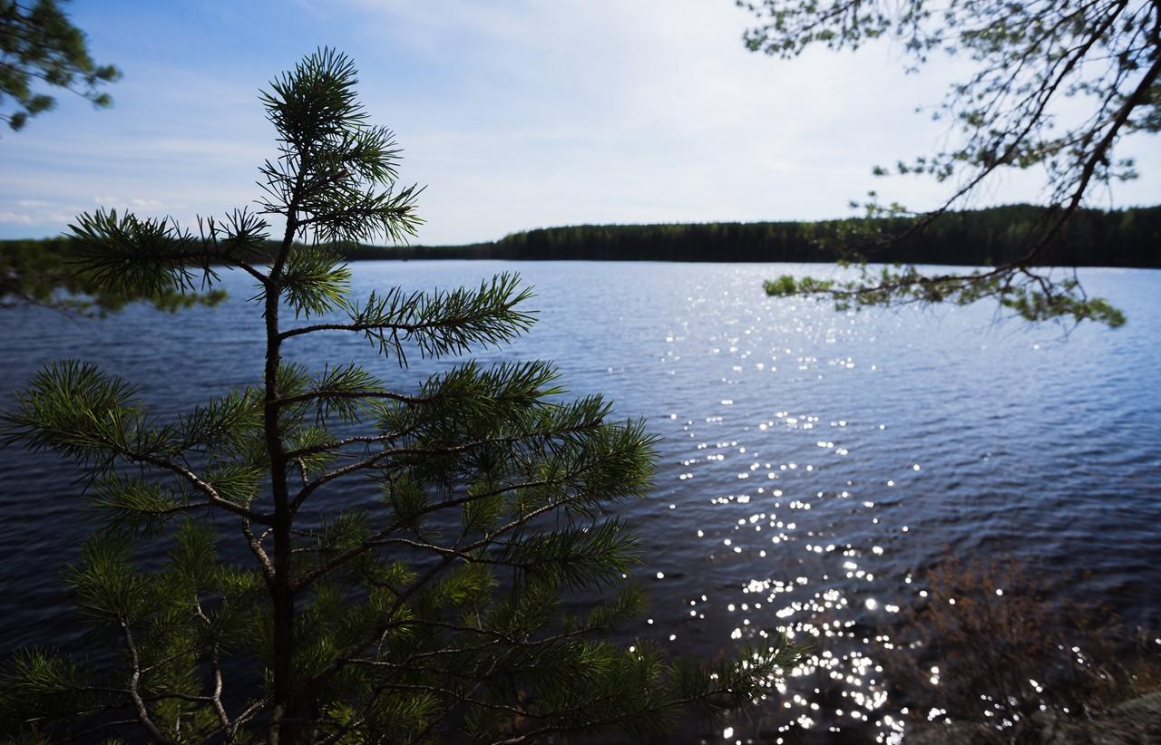 Вид на озеро за елочкой в парке Реповеси
