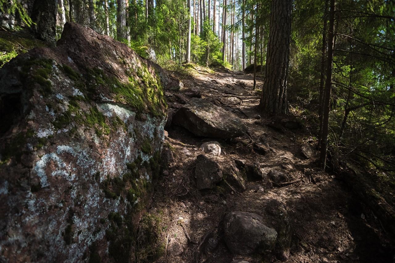 Лисья каменистая тропа в Реповеси