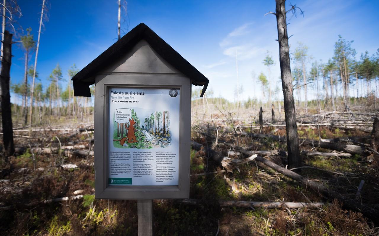 Стенд, повествующий о необходимости выжигания деревьев для восстановления лесов в Реповеси