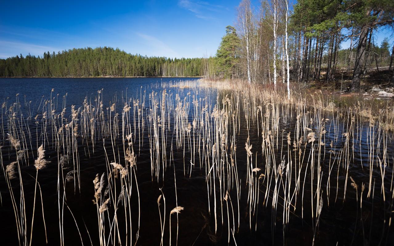 Растения в озере национального парка Реповеси