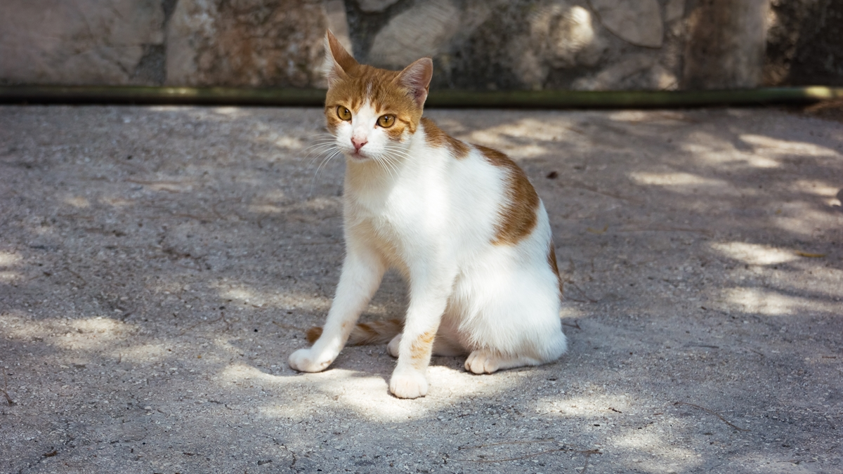 Кошка №2