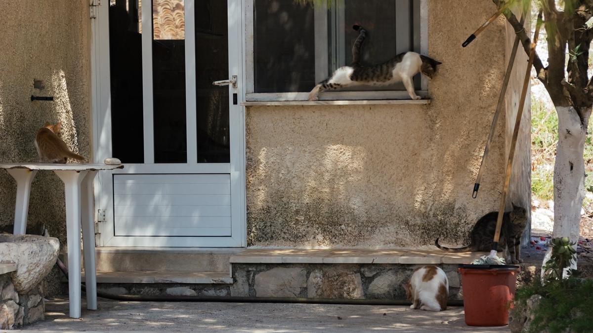 Потягивающаяся греческая кошка