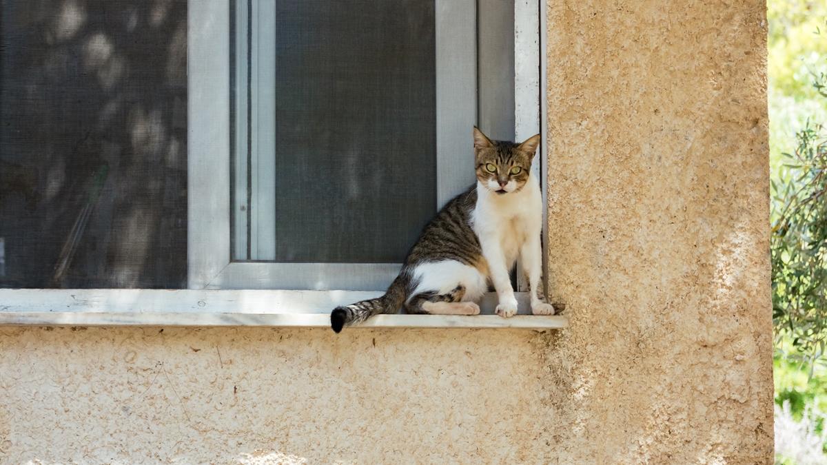 Кошка №1