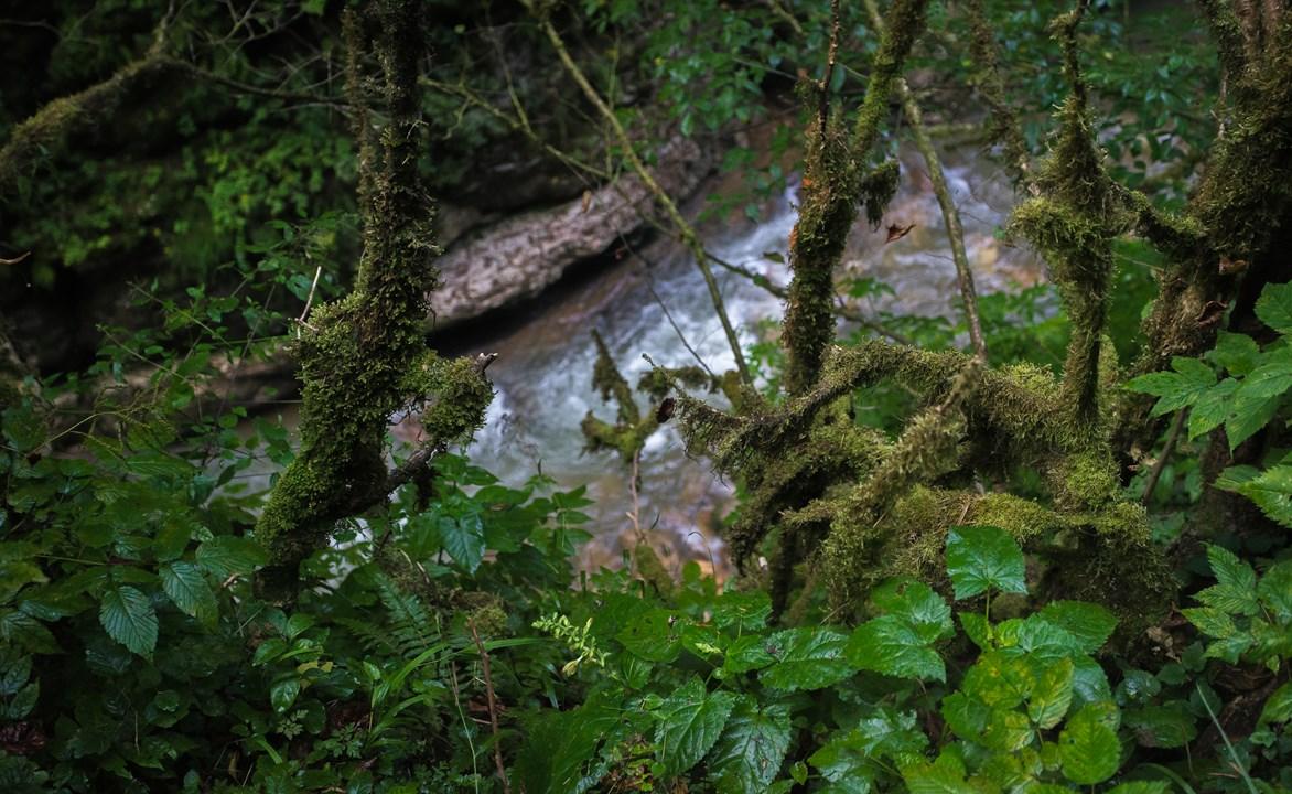 Тропическое Гуамское ущелье
