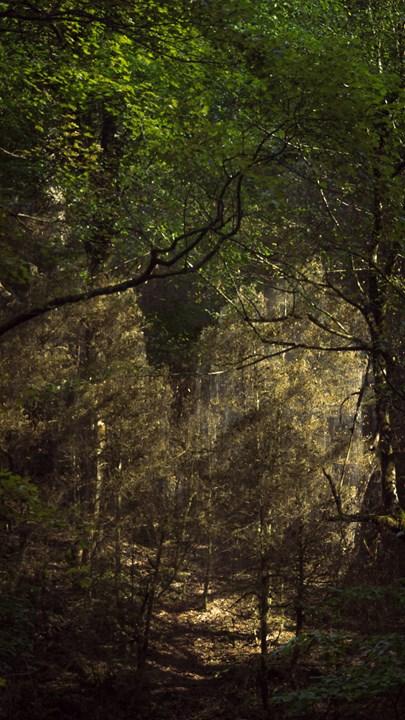 Приближенный кадр окутанных гусеницами самшитов с противоположной стороны