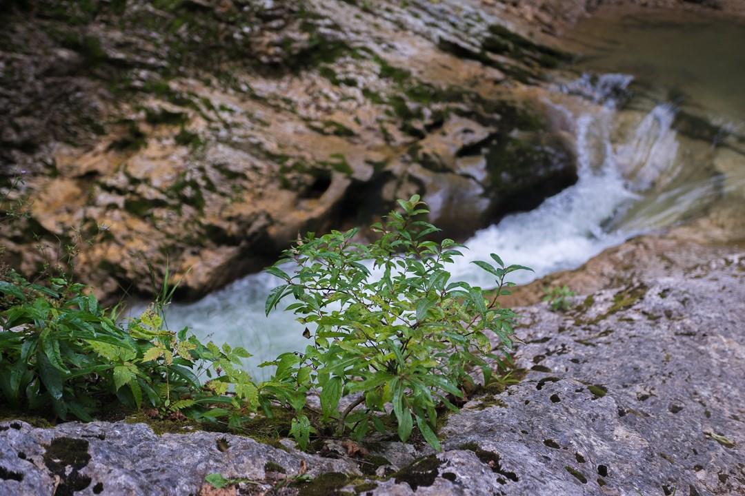 Стекающая вода Курджипса