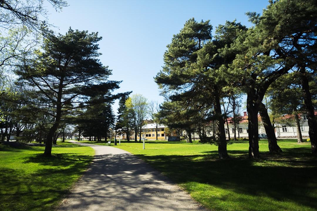 Маленькая парковая зона Ханко с сосновыми деревьями