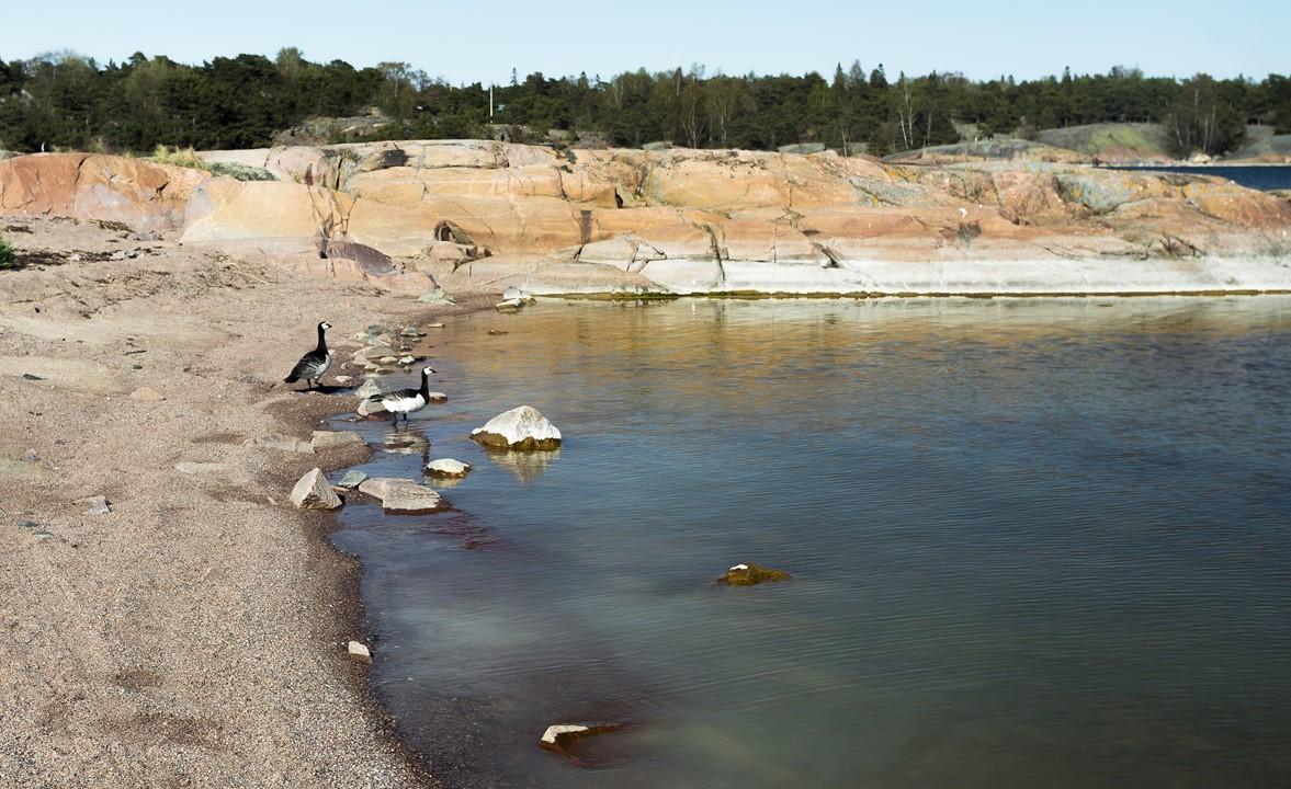 Парочка финских гусей перед стартом