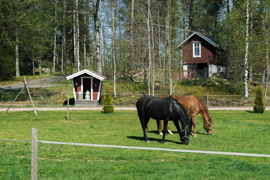 Лошадки :)