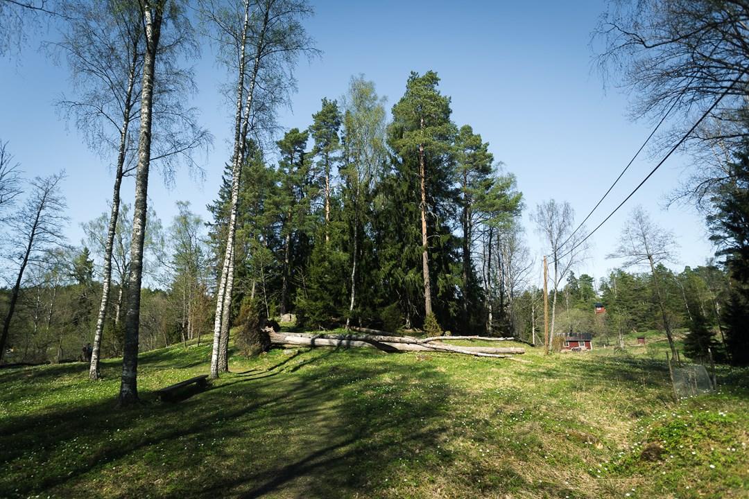 Поваленные деревья по пути