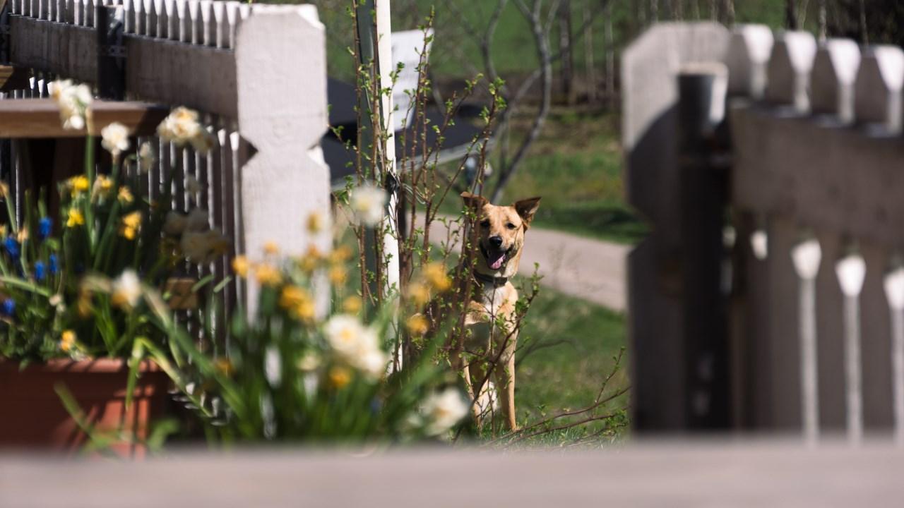 Верная собака ждет своего хозяина около кафе