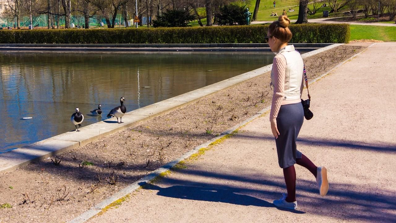 В центре Хельсинки можно встретить вот таких гусей