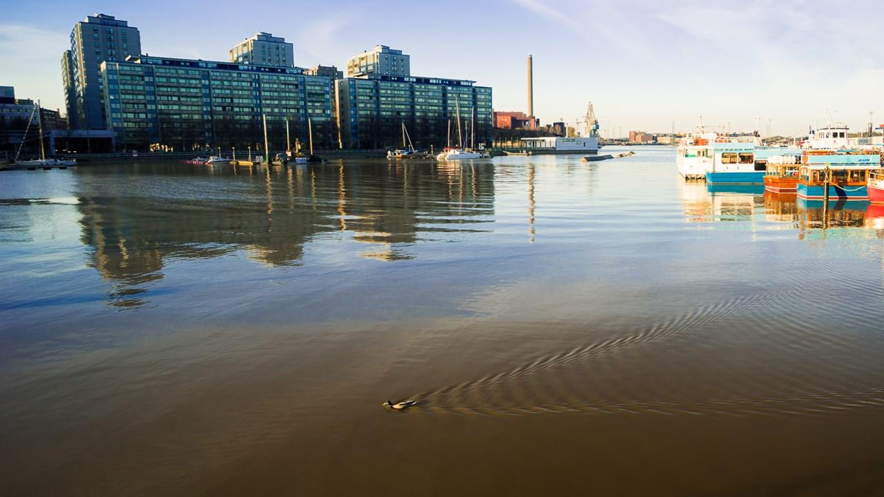 Уточка пересекает залив в Хельсинки