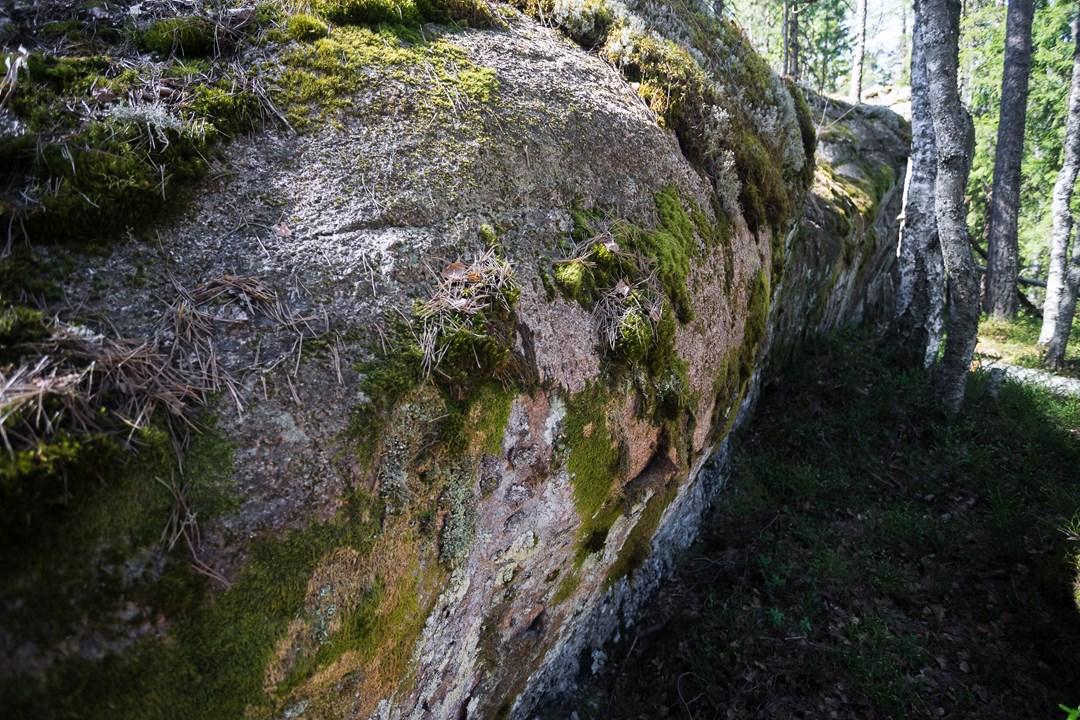 Камни в в Нууксио обросли сухим мхом