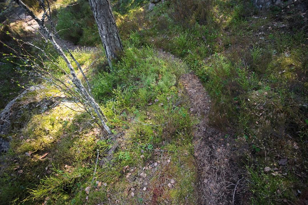 В Нууксио запрещается собирать съедобные грибы, повреждать растения и скалы, причинять вред животным