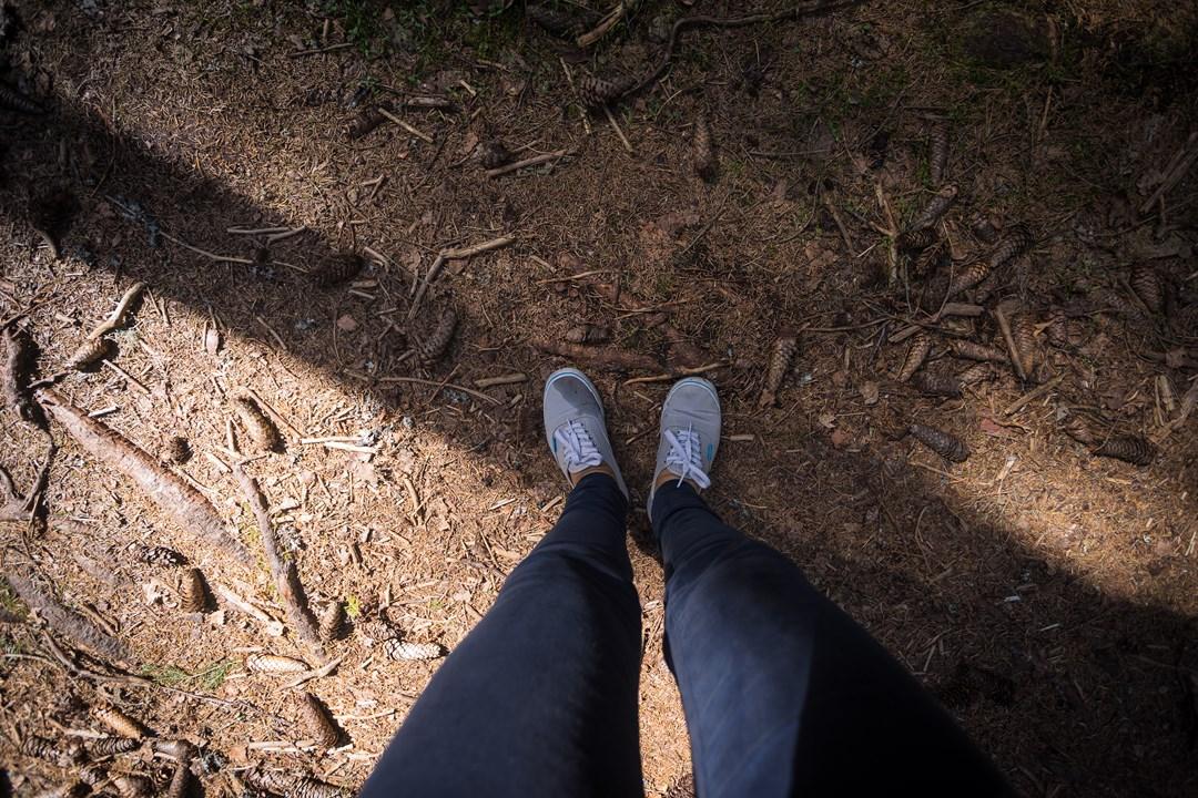 В парке много еловых деревьев и шишек под ногами