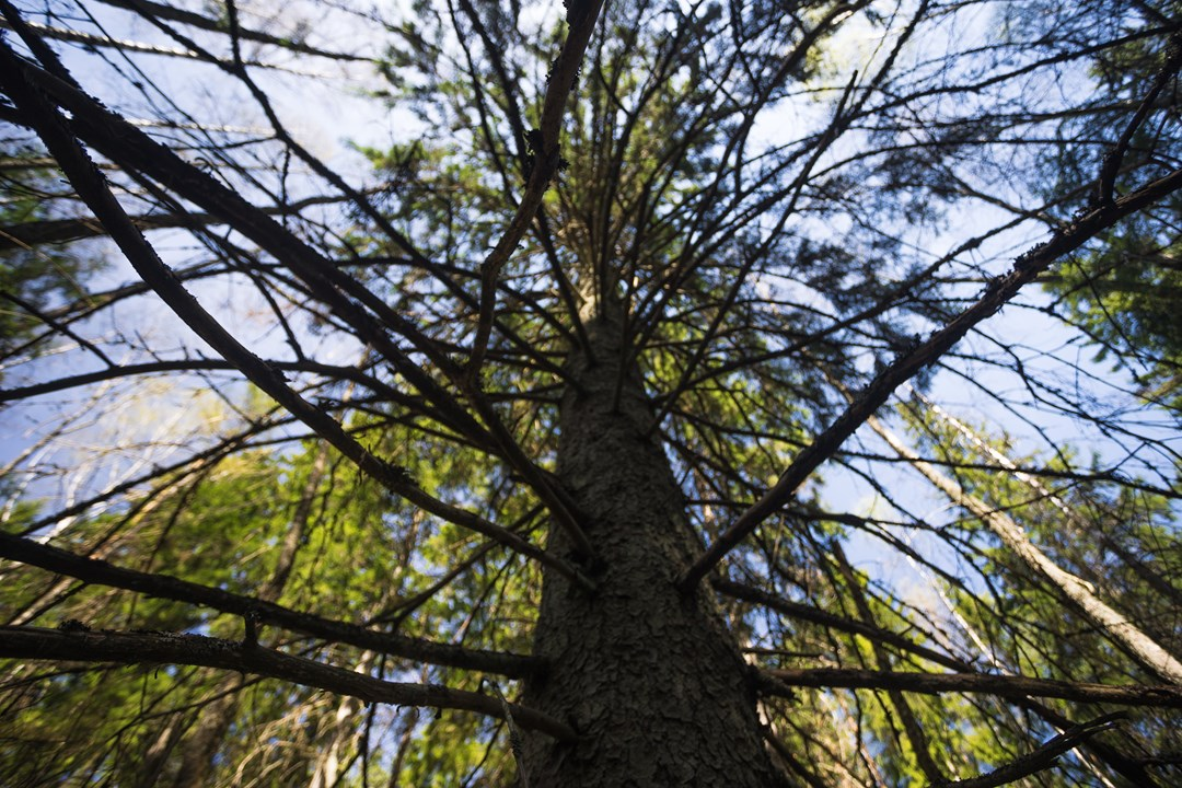 Взгляд в небо рядом с деревом