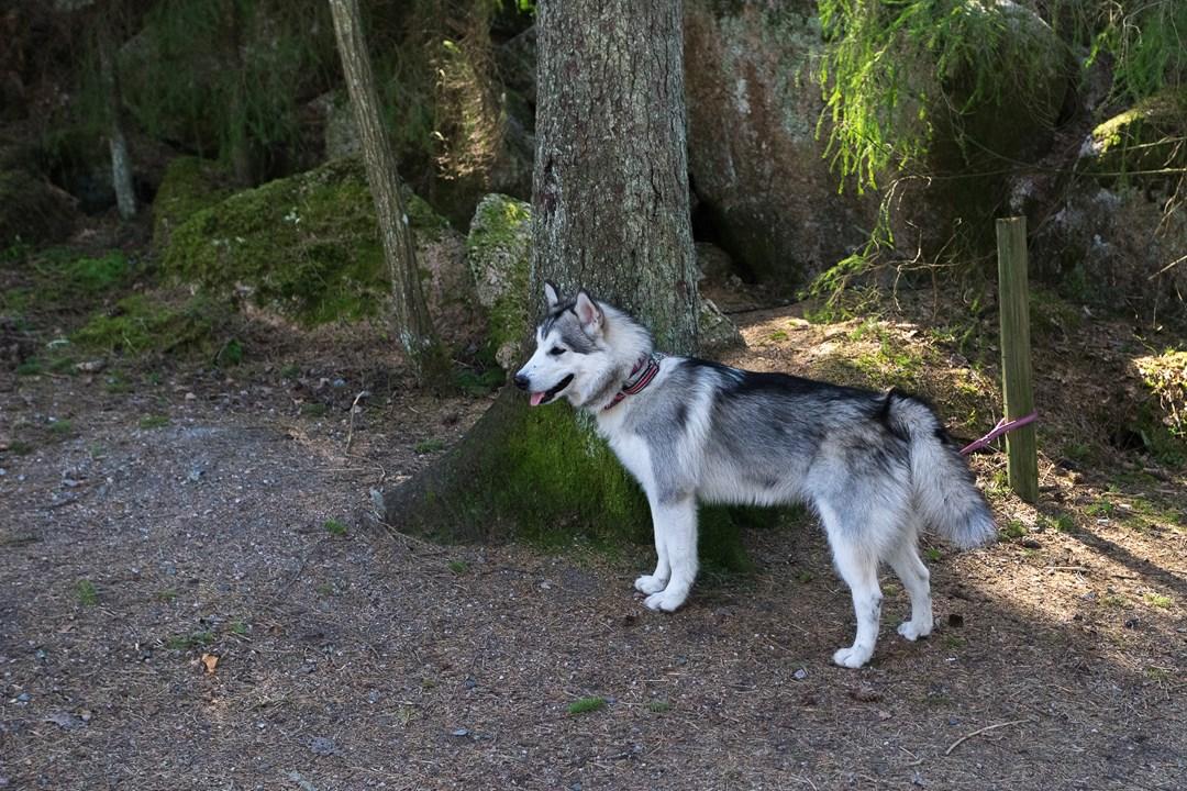 Собачка ждет своего хозяина, пока тот отошёл