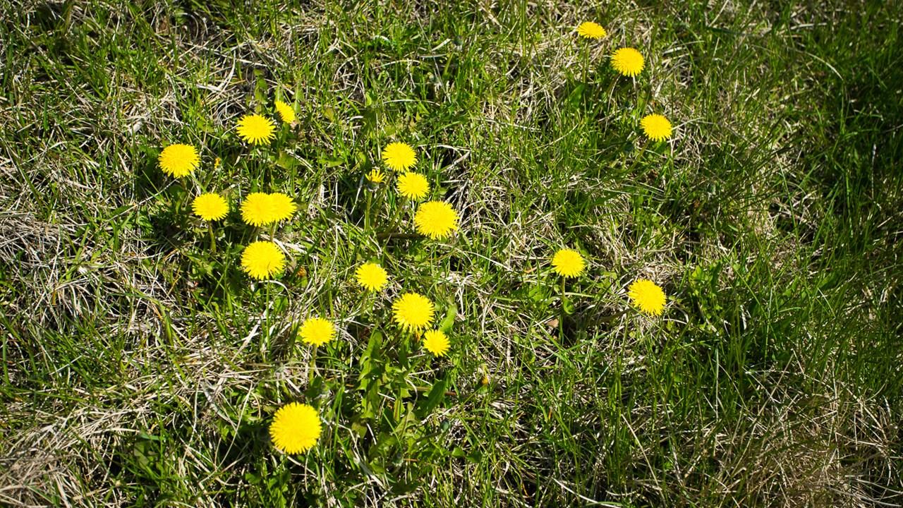 Майские цветы приветствуют весну