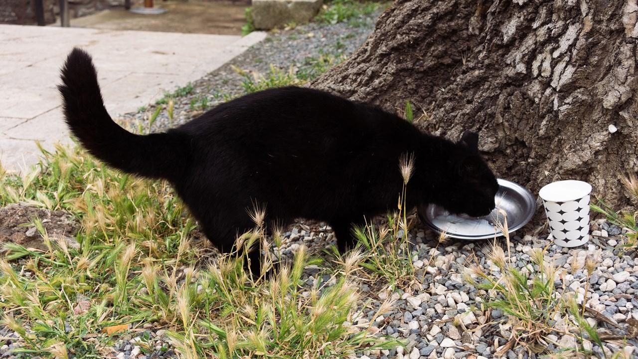 Кошка ест сметану около кассы