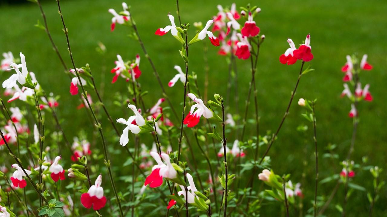 Элегантные цветы на зелёном газоне парка Топкапы