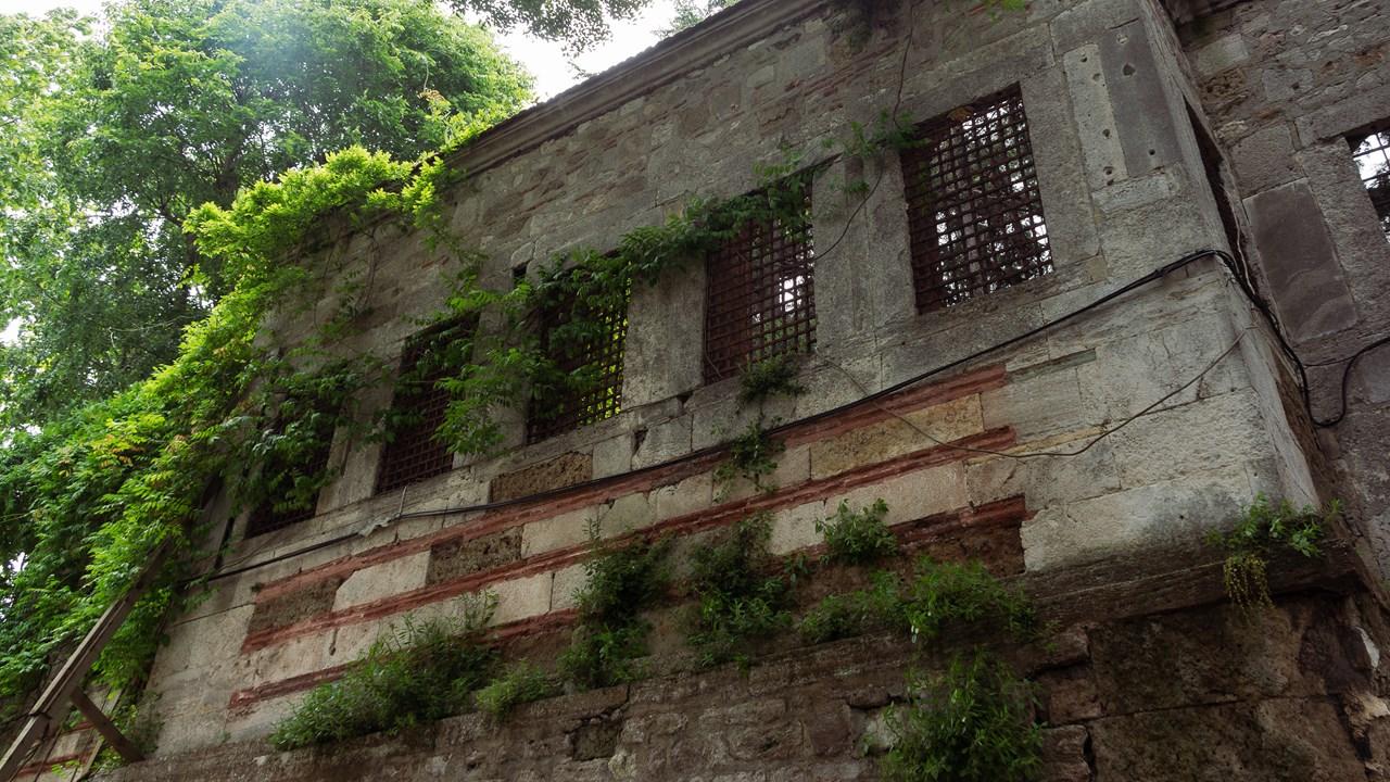 Азиатские джунгли в Стамбуле
